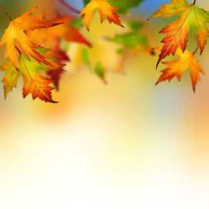Autumn Leaves Background For Powerpoint – Flower Ppt Templates for Free Fall Powerpoint Templates