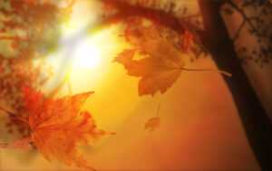 Autumn Leaves With Sunlight Free Ppt Backgrounds For Your inside Free Fall Powerpoint Templates
