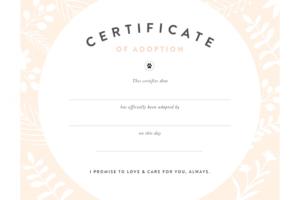 Fan Printable Adoption Certificate | Graham Website intended for Child Adoption Certificate Template