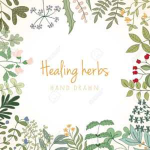 Hand Drawn Vintage Background Of Medicinal Organic Healing Herbs. Vector  Medical Plants And Herbal Botanical Flowerelements Can Be Used For Banner inside Med Card Template